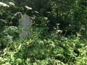 The Present: Camberwell Old Cemetery Wood
